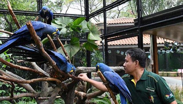 幼时因病失聪 新加坡豢养员竟懂鸟语