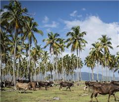 走进加勒比岛国:多米尼加共和国