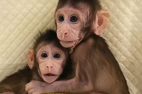 鸿运国际娱乐网站克隆猴技术的科学价值与伦理意义