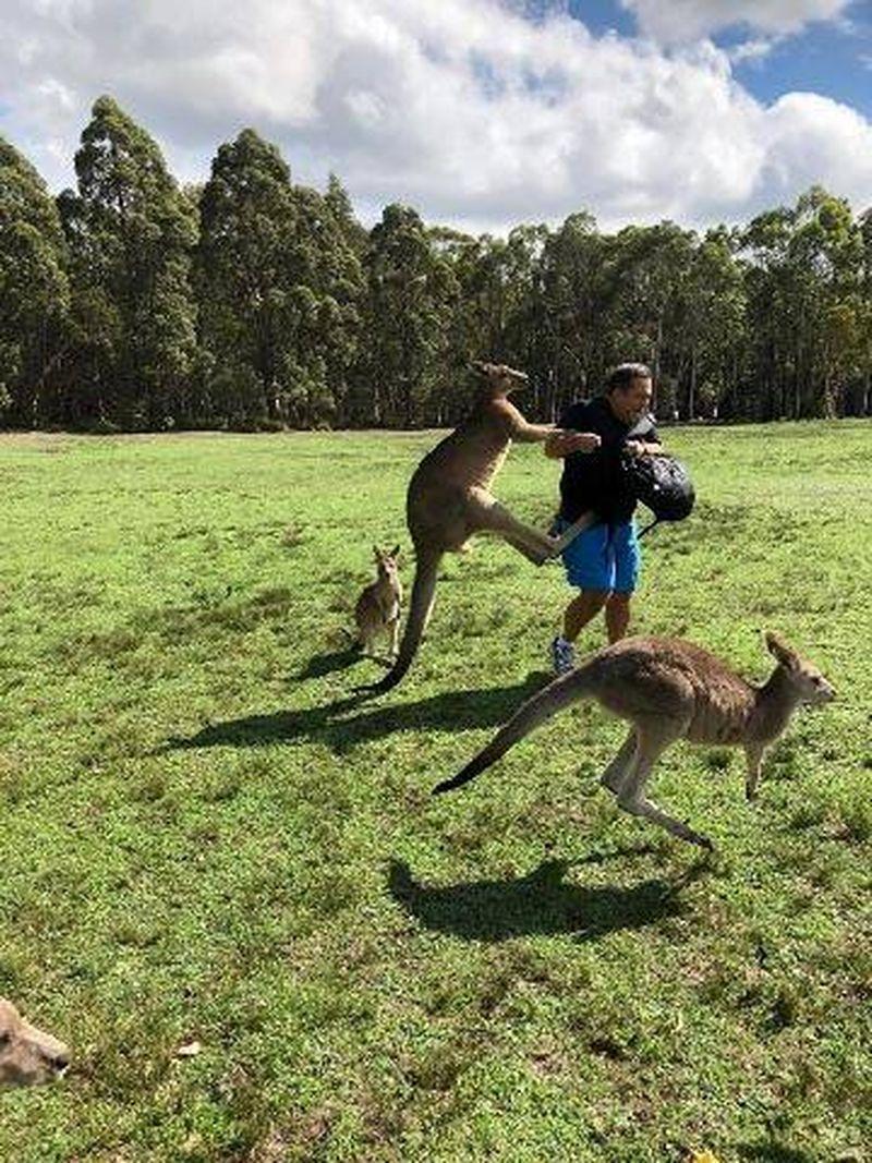小心被揍!澳大利亚这个精神病院住着一群会打人的袋鼠