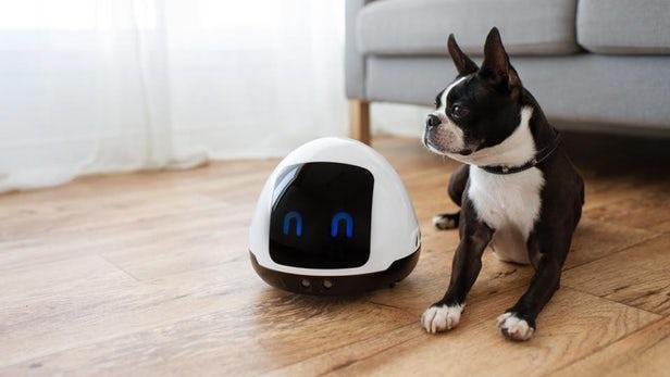 能与宠物互动 宠物伴侣机器人还能给它们提供食物