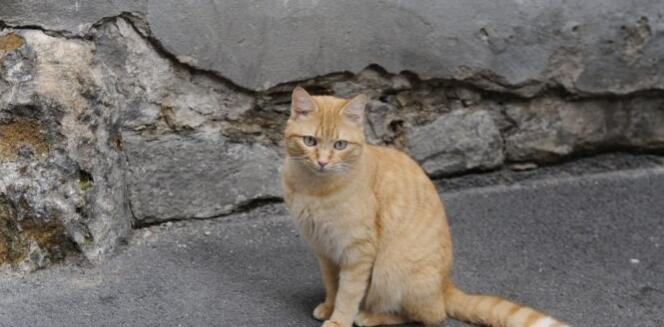 法国一名男子因扔猫下楼致其死亡 被判监禁5个月