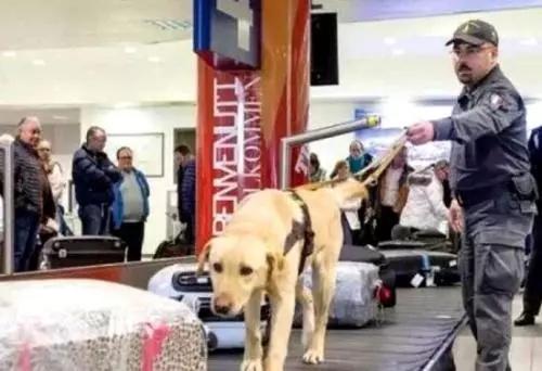 意大利机场海关使用专业警犬检查旅客物品。图片来源:欧联网