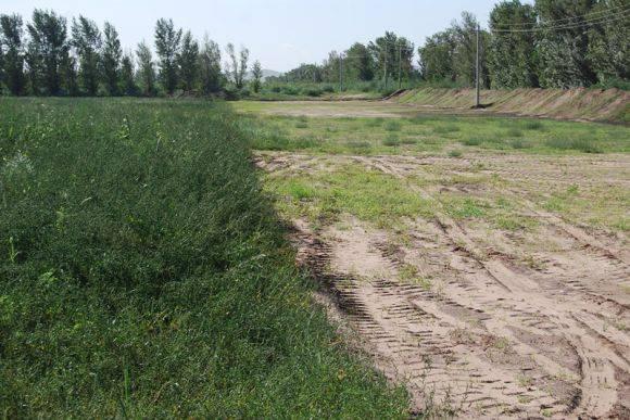 内蒙古一药企侵占万亩防护林地 变农地转包种植牟利