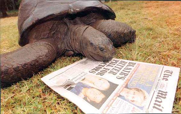 86岁世界最长寿陆龟因年纪过大无法做白内障手术