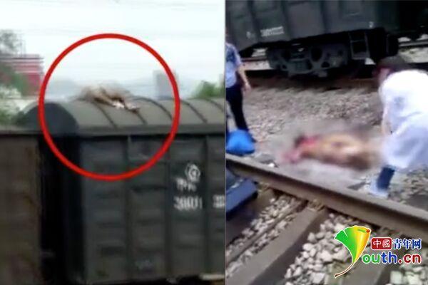 重庆一男子爬火车被高压电烧伤?知情人:为给顾客拍照片