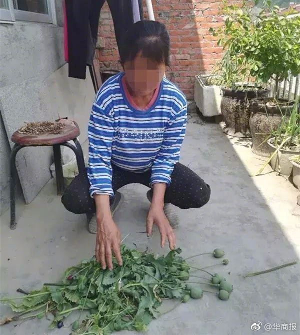 陕西汉中警方用无人机航查 在居民楼顶发现罂粟