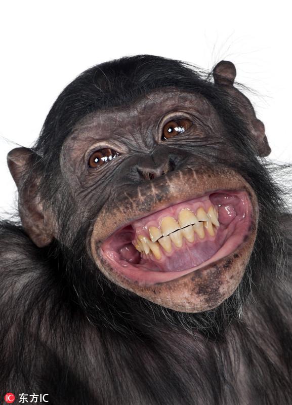 世界微笑日 来看看小动物的治愈笑容