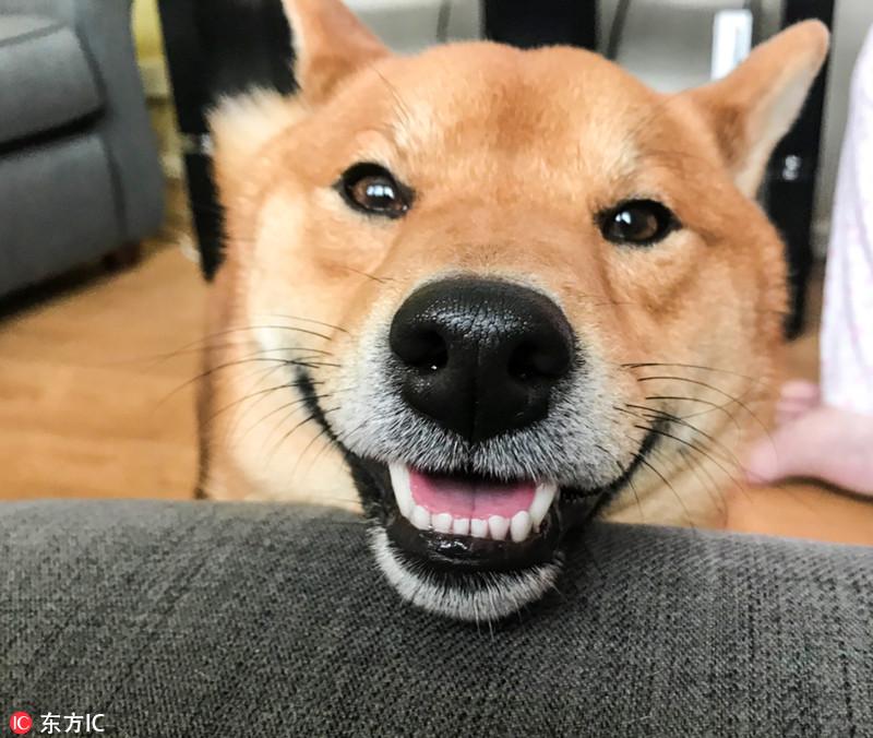 来看小动物的治愈笑容