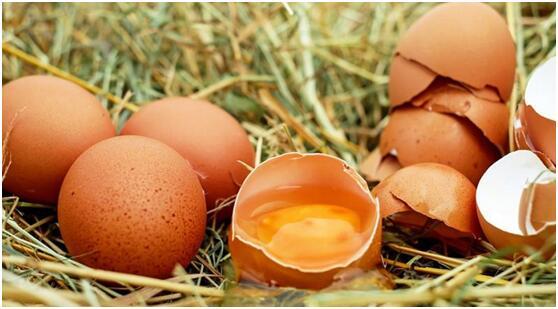 研究:鸡蛋不会增加患心血管疾病风险