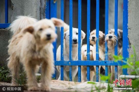 日媒:如何处理流浪狗?不如学日本训成警犬