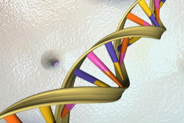 DNA打结怎办?一种生物机制能解