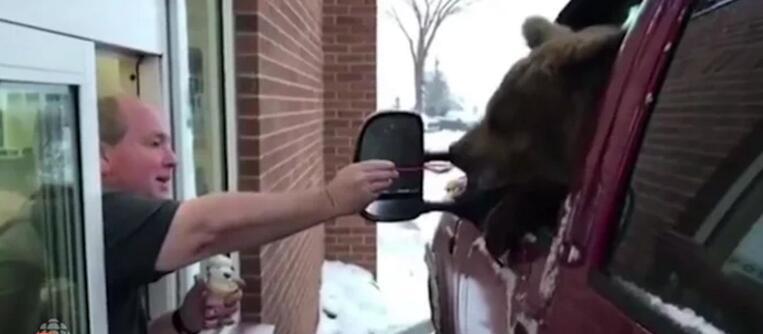 加拿大一动物园因带狗熊外出买冰激凌遭指控 恐要关门