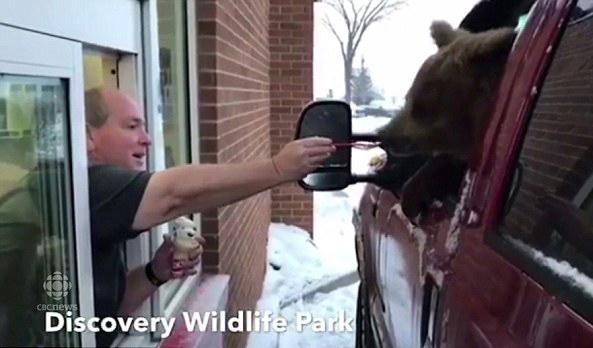 加动物饲养员私自带熊外出吃冰淇淋 或面临起诉