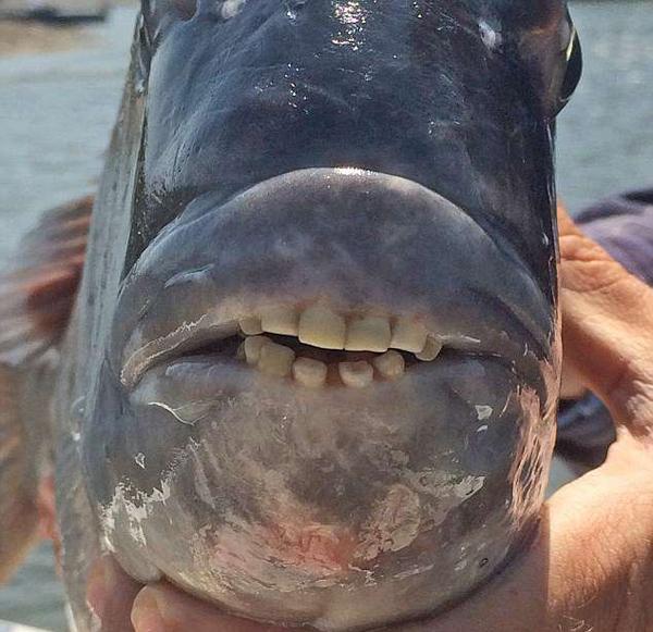 猜这是什么?美南卡罗莱纳州发现怪鱼牙齿似人类