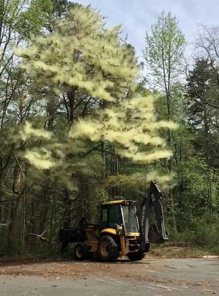 """美男子开挖掘机撞上大树 花粉抖落如绿色""""云雾"""""""