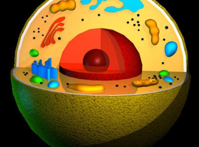 AI打造首张复杂细胞3D图 可精准展示细胞内病变