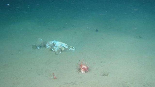 最深垃圾堆!太平洋1.1万米海沟中现大量白色垃圾