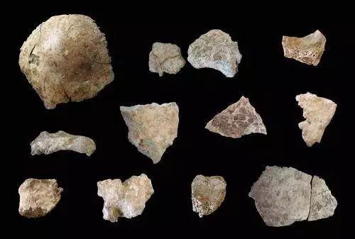 研究员在距今七千年前古人类遗骨上发现乙肝病毒