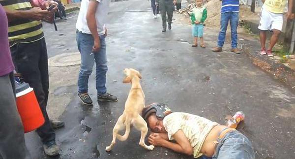 哥伦比亚一男子醉宿街头 爱犬在身旁忠心守护