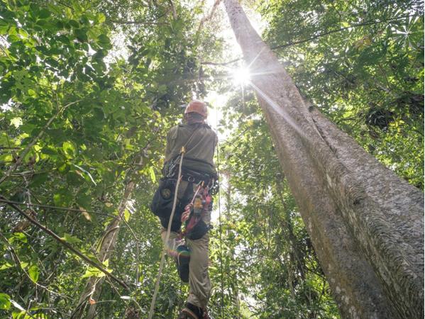 从太空到热带雨林 谷歌TensorFlow都能做些什么?