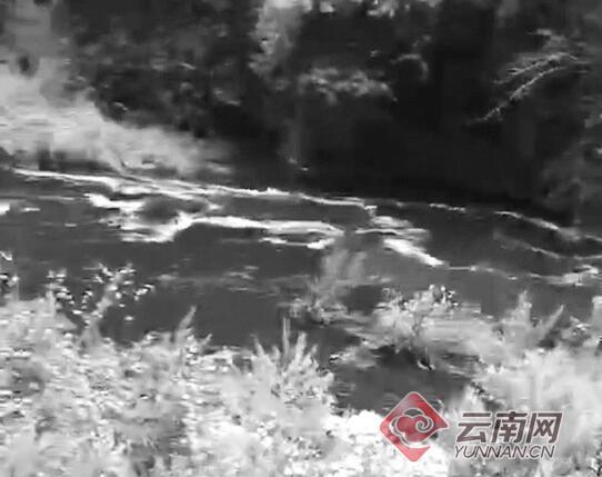 云南丽江部分水体变黑臭并有牲畜尸体,环保局:水闸放水引起