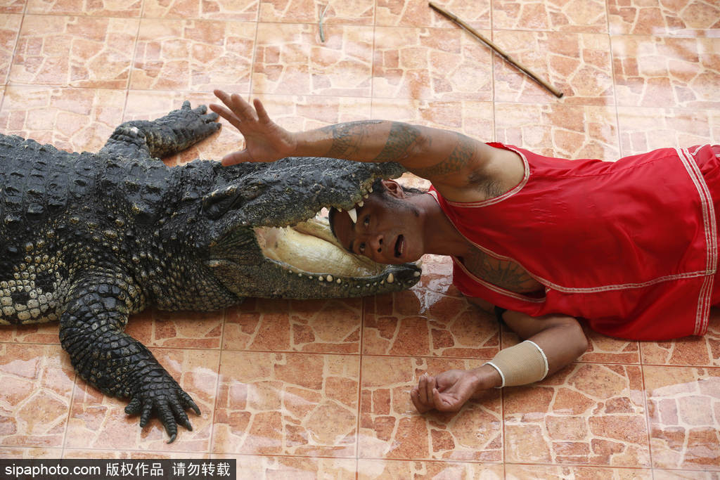泰国动物园表演者头手入鳄鱼口