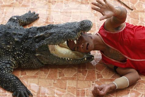 惊险刺激!泰国动物园表演者头手入鳄鱼口
