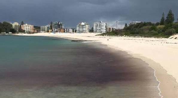 摄影师澳海岸边拍到护士鲨吞食鱼罕见画面