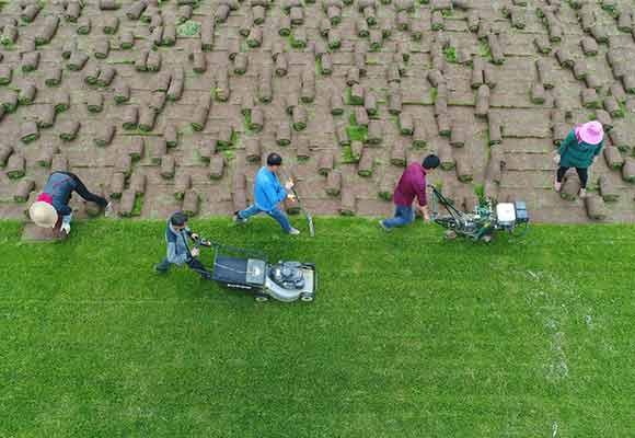 绿草皮里的致富经:农民通过多种方式增收