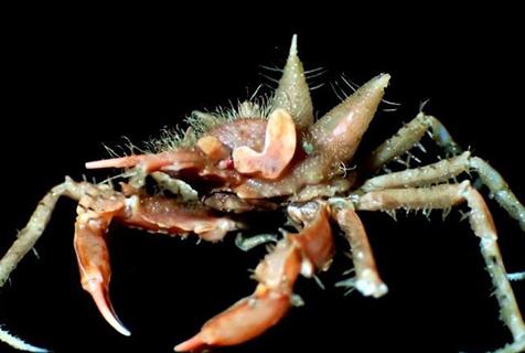 科学家印尼海域发现多种怪异深海生物