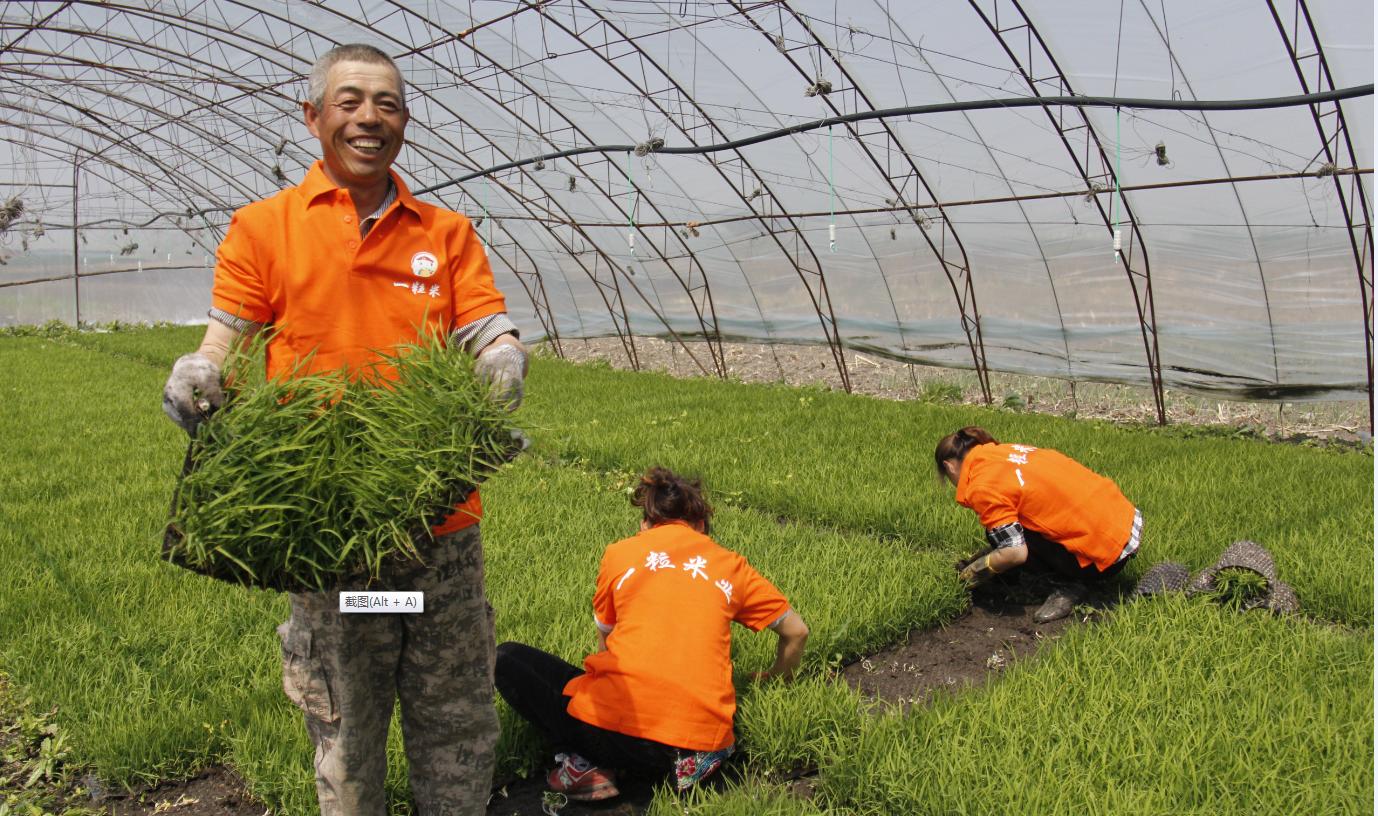 一粒米业核心主产区开启水稻插秧季