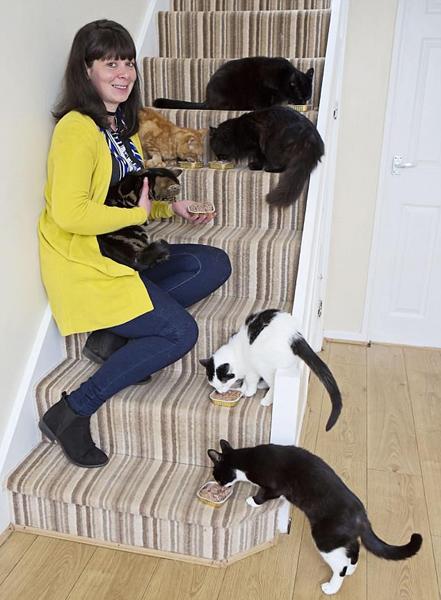 英女子家八只猫楼梯上同框 排列整齐憨态蠢萌