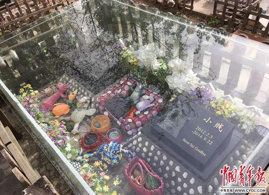 """""""宠物墓地""""为何受捧:价格2000元起 墓碑等费用另计"""