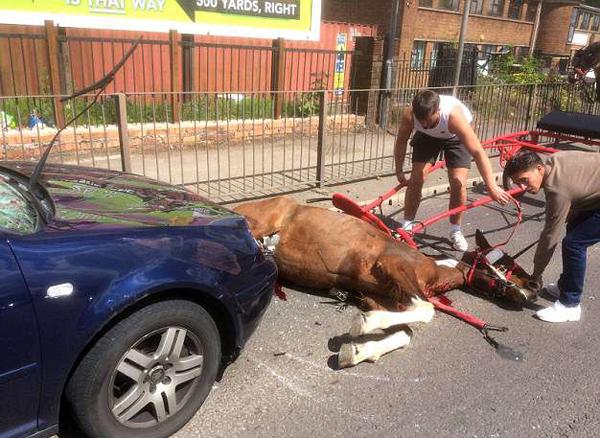 英街头一老马被轿车撞成重伤 马主车主双双逃逸