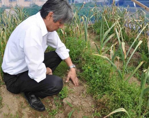 日本频发偷菜案 菜农积极性遭重挫