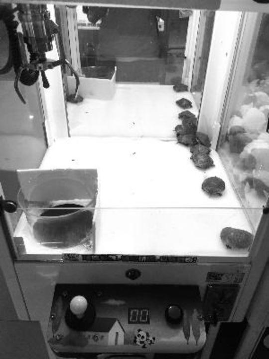 无锡一商场抓娃娃机抓活乌龟被指虐待动物