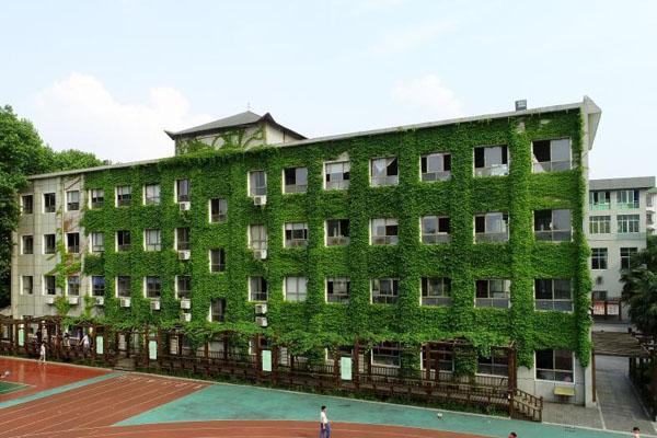 湖北襄阳一教学楼长满爬山虎 成校园美丽风景