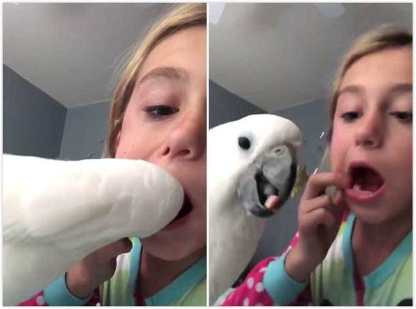 有创意!美小女孩让宠物鹦鹉帮其拔掉松动乳牙