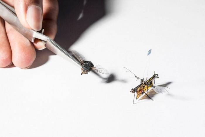 第一款无需系绳就能飞行的微型机器人RoboFly亮相