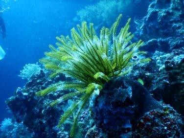 博内尔岛禁用防晒霜:为防水质污染影响珊瑚生长