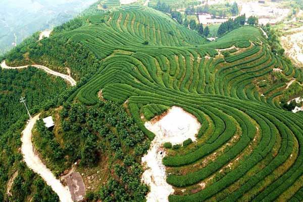 航拍福建平和壮观的茶山梯田