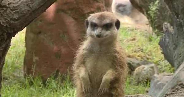 匈牙利少年摔死动物园怀孕猫鼬 网友齐声讨