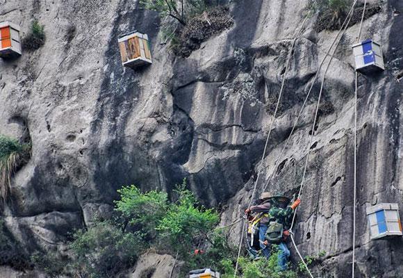 揭秘北京燕山深处养蜂人:在悬崖上养蜂