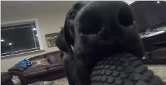 狗子偷了主人的运动相机就跑,就有了这么一段角度奇特的片段