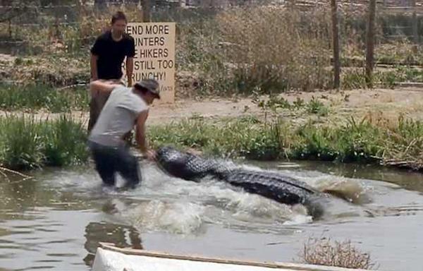 美国一男子水中直播鳄鱼活动险遭鳄鱼咬掉手