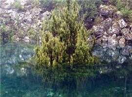 澳大利亚岛州再现罕见湖水