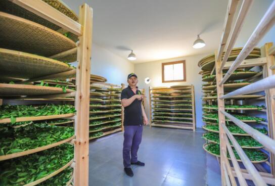 探访武夷山最大的手工制茶工坊