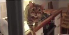趁主人不注意一步步靠近的猫咪,每个静止的样子都尽全力在表演了