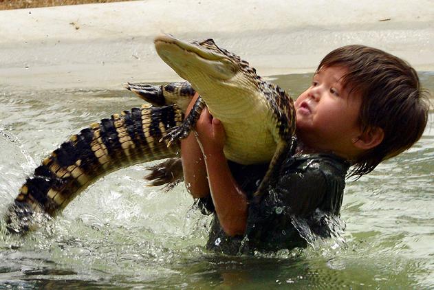 澳男孩一岁抓蛇三岁摸鳄鱼 与猛兽亲密似好友